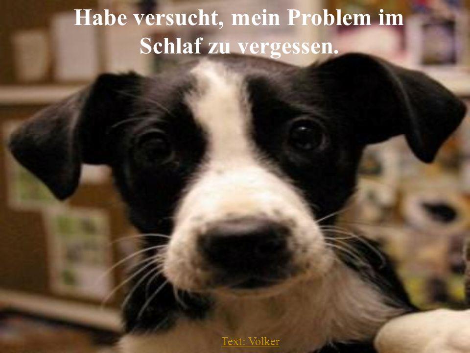 Text: Volker Habe versucht, mein Problem im Schlaf zu vergessen.