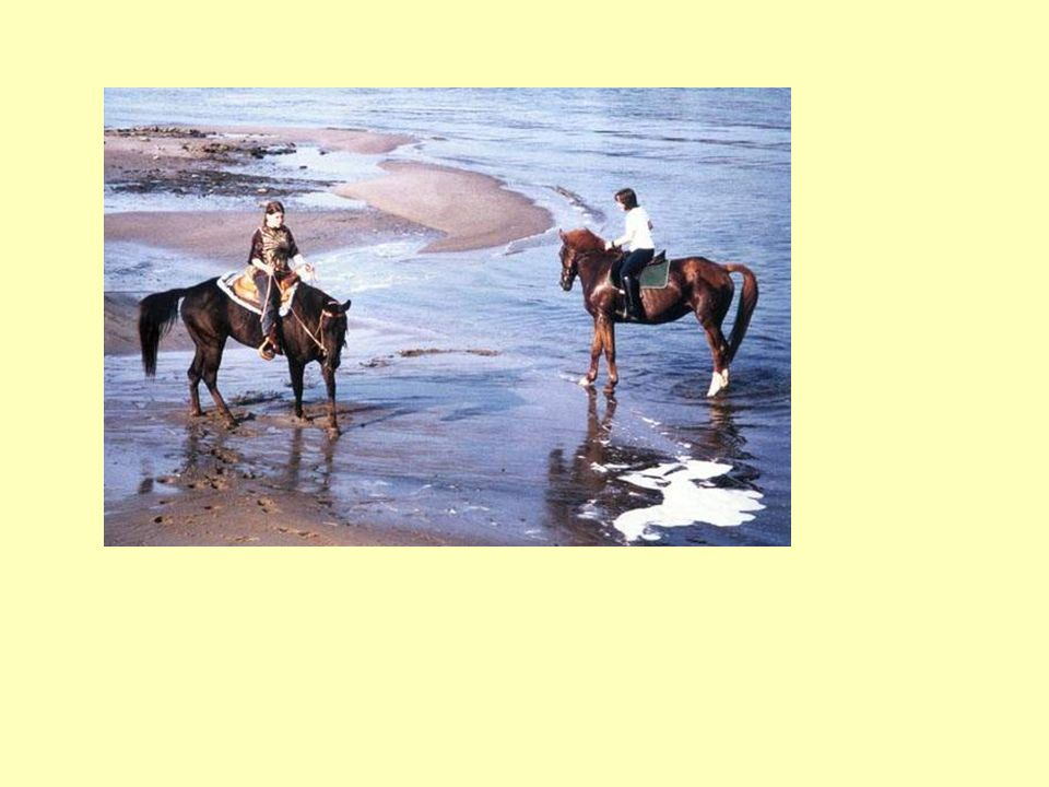 Pferde: Einem jeden, der sie reitet, naht sein Glücksstern sich im Raum.