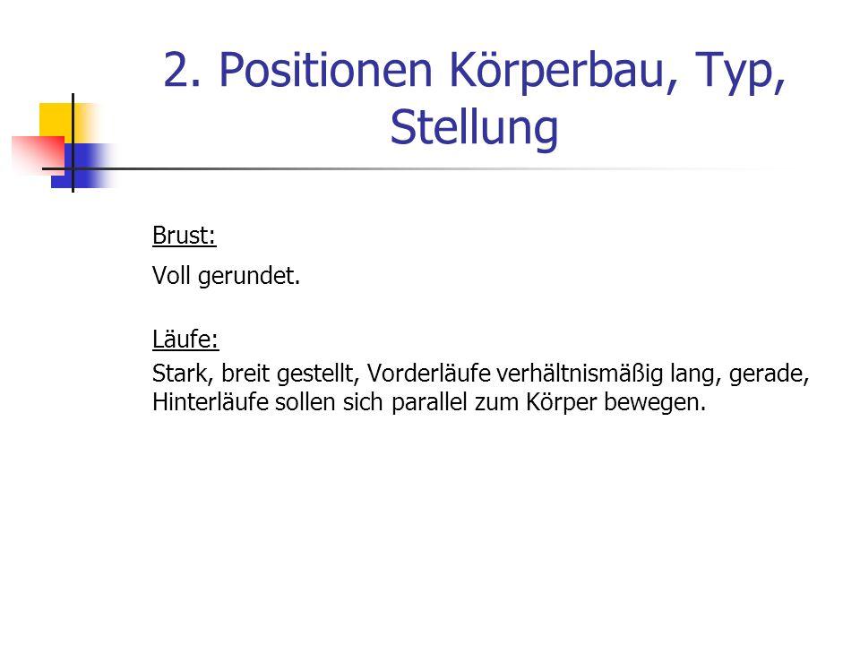 2.Positionen Körperbau, Typ, Stellung Brust: Voll gerundet.