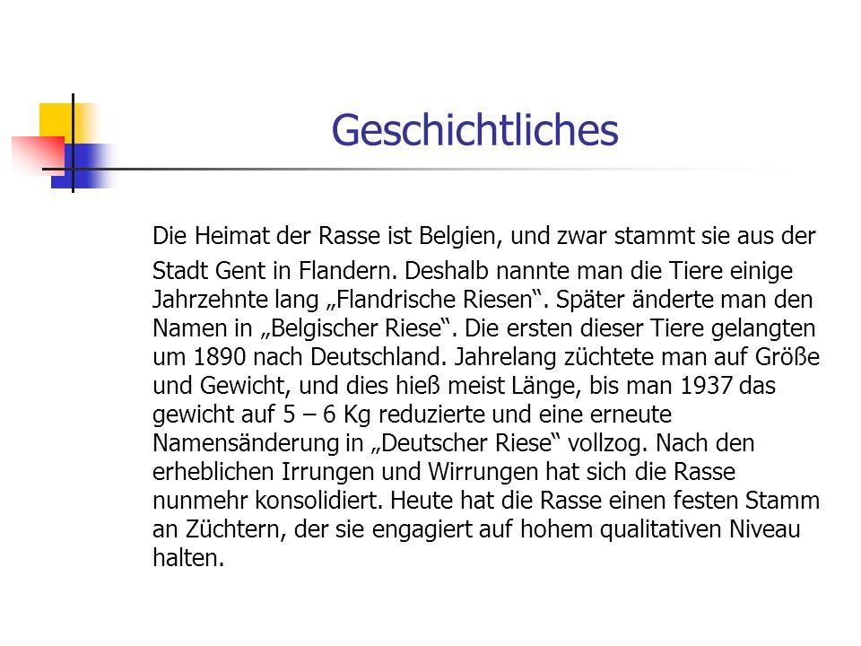 Geschichtliches Die Heimat der Rasse ist Belgien, und zwar stammt sie aus der Stadt Gent in Flandern.