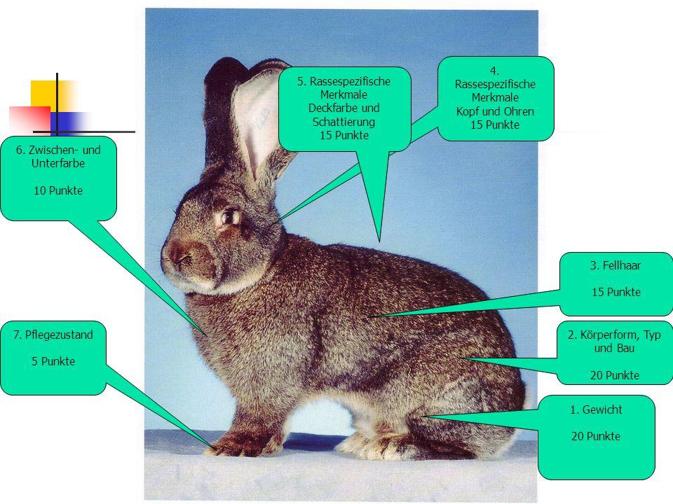 4.Rassespezifische Merkmale Kopf und Ohren 15 Punkte 5.