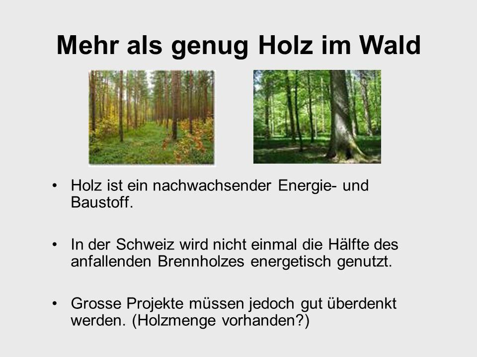 Holz ist Energie, die nachwächst.