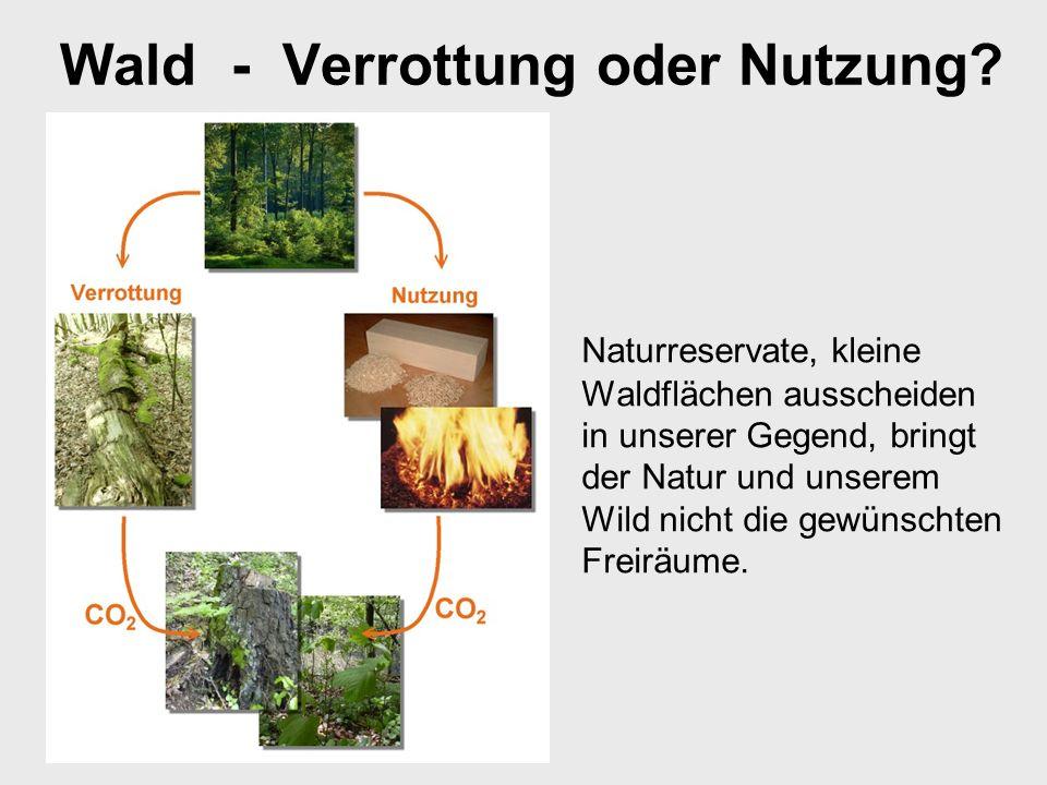 Wald - Verrottung oder Nutzung.
