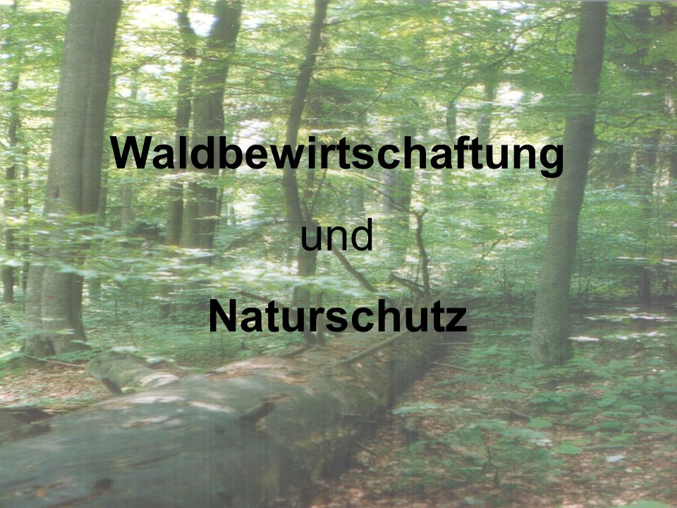 Waldbewirtschaftung und Naturschutz