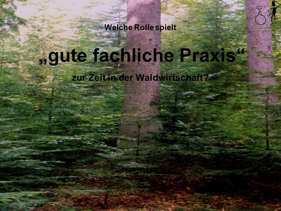 Welche Rolle spielt gute fachliche Praxis zur Zeit in der Waldwirtschaft?
