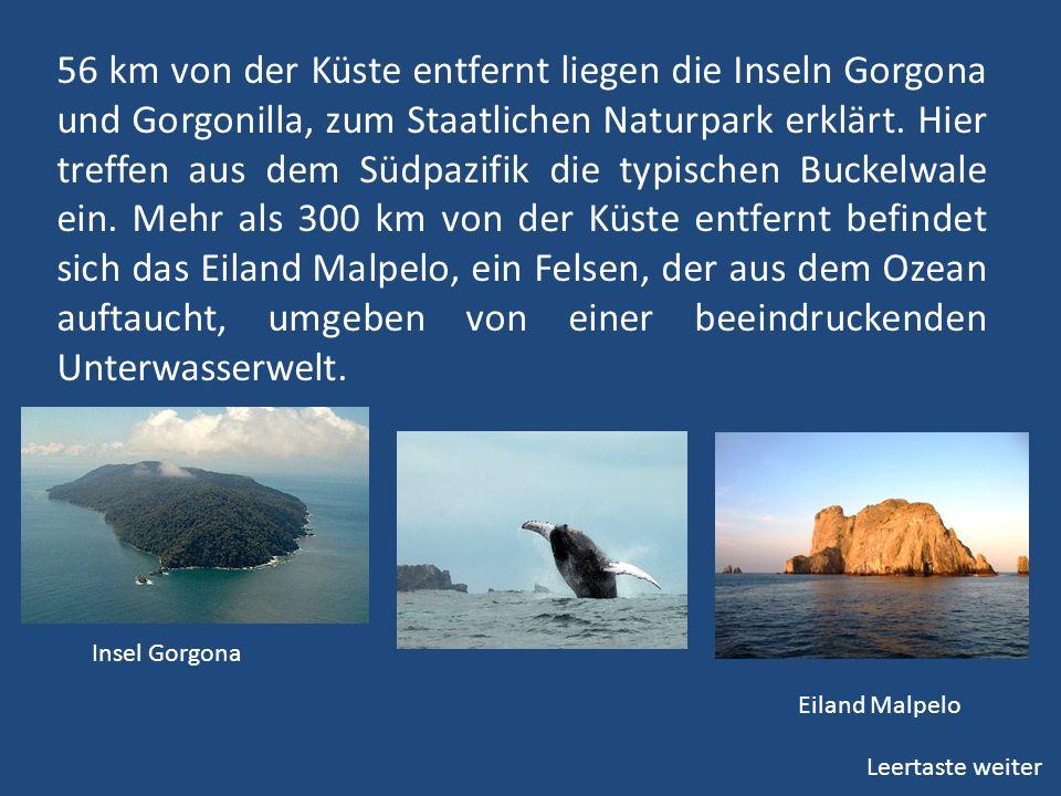56 km von der Küste entfernt liegen die Inseln Gorgona und Gorgonilla, zum Staatlichen Naturpark erklärt. Hier treffen aus dem Südpazifik die typische