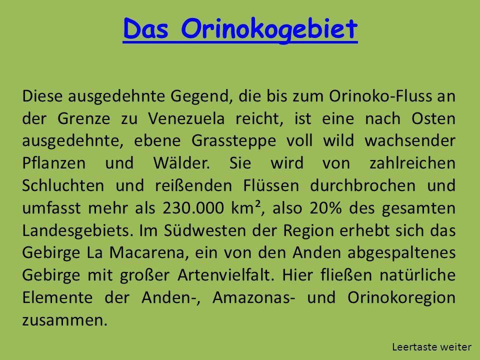 Das Orinokogebiet Diese ausgedehnte Gegend, die bis zum Orinoko-Fluss an der Grenze zu Venezuela reicht, ist eine nach Osten ausgedehnte, ebene Grasst