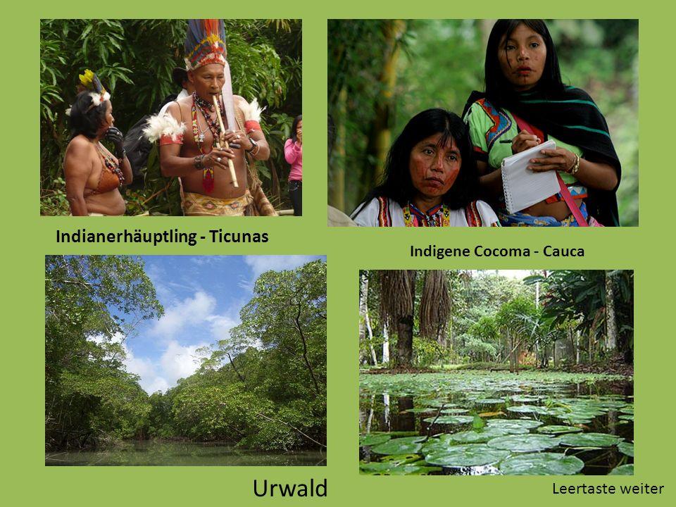 Urwald Indianerhäuptling - Ticunas Indigene Cocoma - Cauca Leertaste weiter