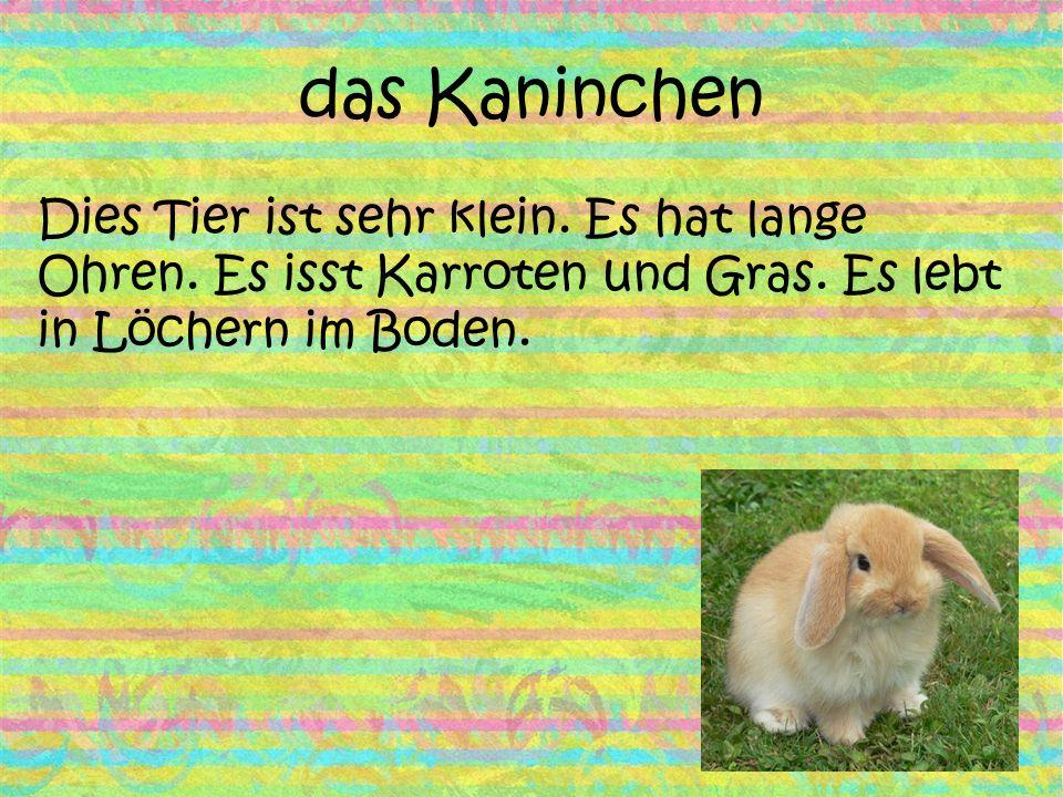 das Kaninchen Dies Tier ist sehr klein. Es hat lange Ohren. Es isst Karroten und Gras. Es lebt in Löchern im Boden.