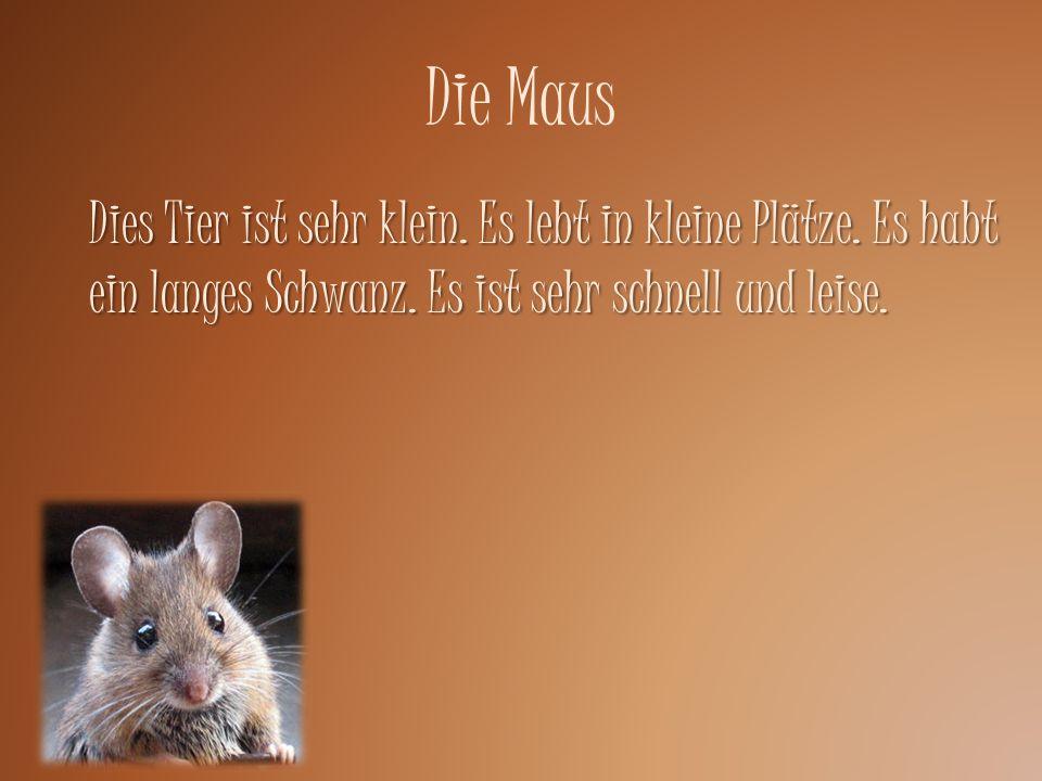 Die Maus Dies Tier ist sehr klein. Es lebt in kleine Plätze. Es habt ein langes Schwanz. Es ist sehr schnell und leise.