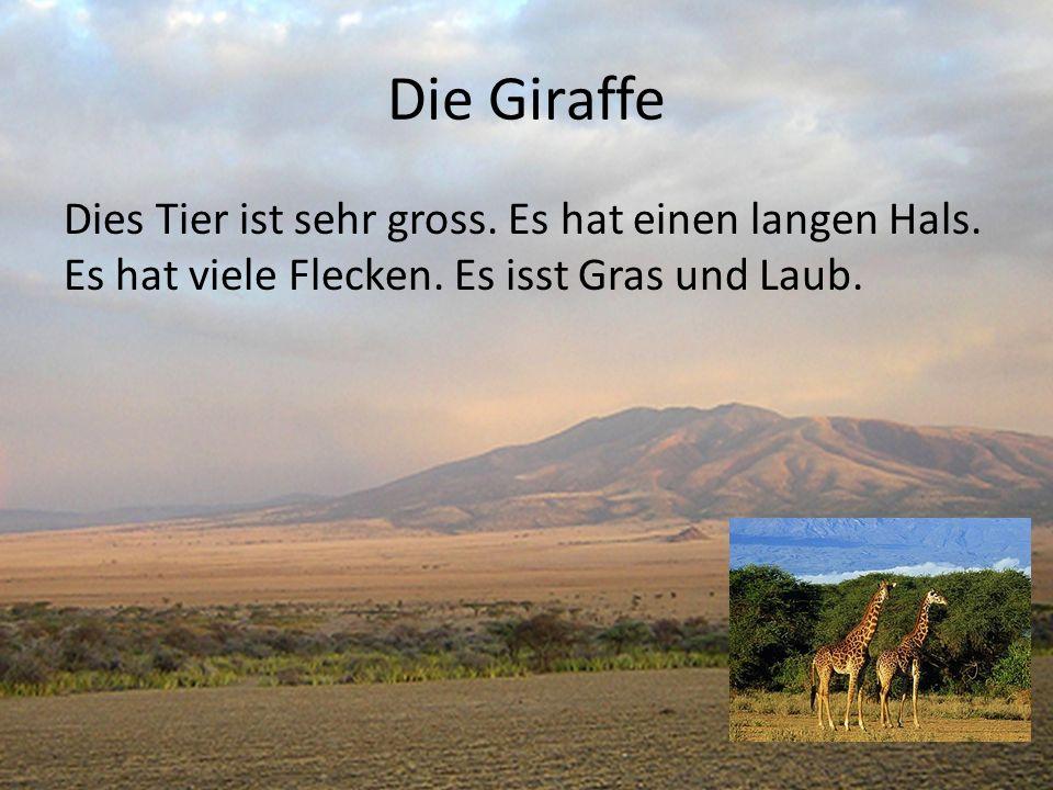 Die Giraffe Dies Tier ist sehr gross. Es hat einen langen Hals. Es hat viele Flecken. Es isst Gras und Laub.