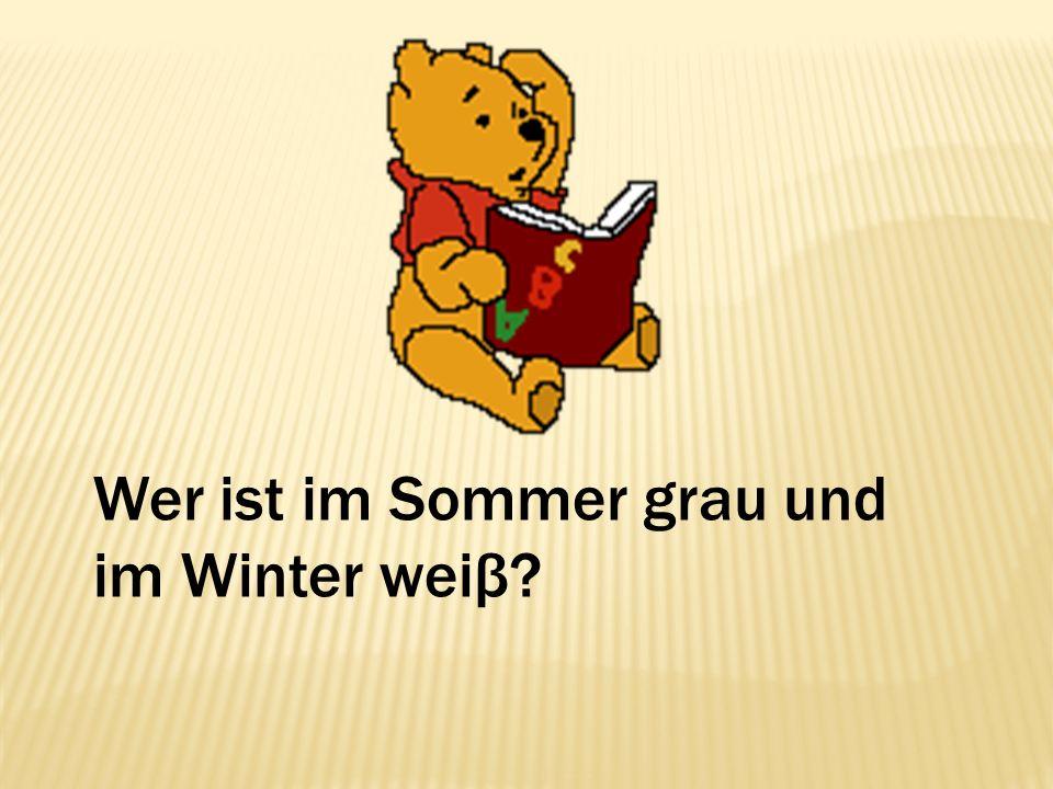 Wer ist im Sommer grau und im Winter weiβ?