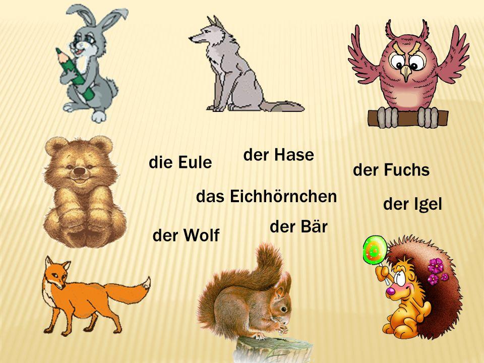 der Hase der Igel der Wolf der Fuchs die Eule der Bär das Eichhörnchen