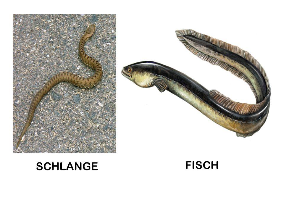 SCHLANGE FISCH