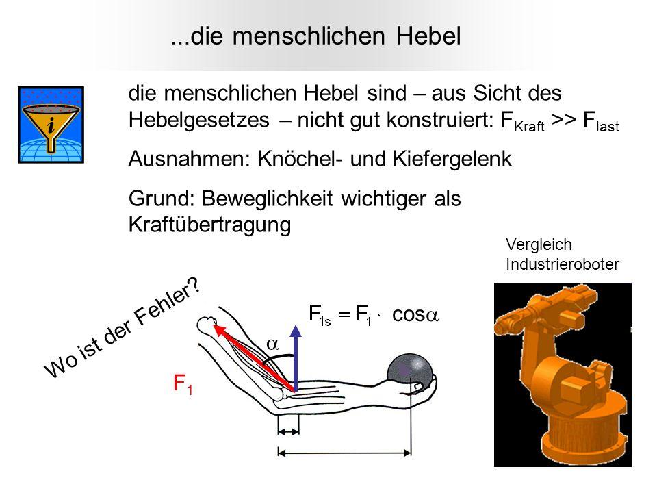 F1F1...die menschlichen Hebel die menschlichen Hebel sind – aus Sicht des Hebelgesetzes – nicht gut konstruiert: F Kraft >> F last Ausnahmen: Knöchel-