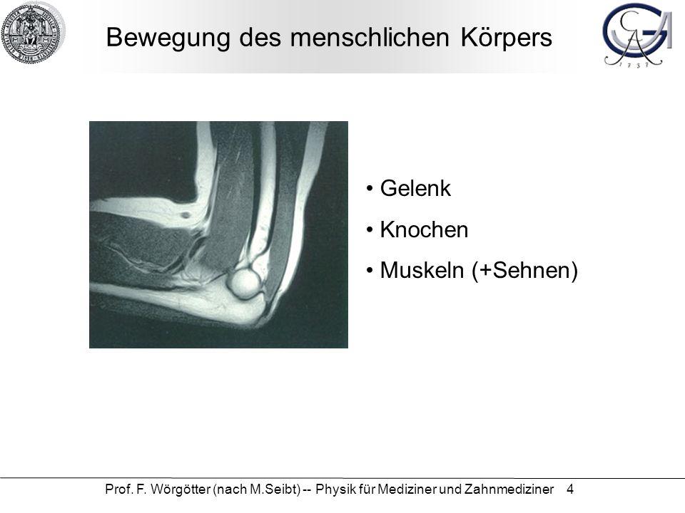 Prof. F. Wörgötter (nach M.Seibt) -- Physik für Mediziner und Zahnmediziner 4 Bewegung des menschlichen Körpers Gelenk Knochen Muskeln (+Sehnen)