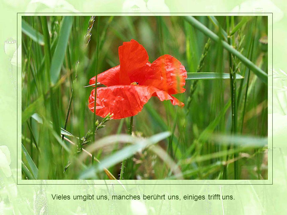Fotos: © Nadine Wolfgang www.kreativ-atelier-muttenz nadine.wolfgang@gmx.ch Musik: Summer Wine