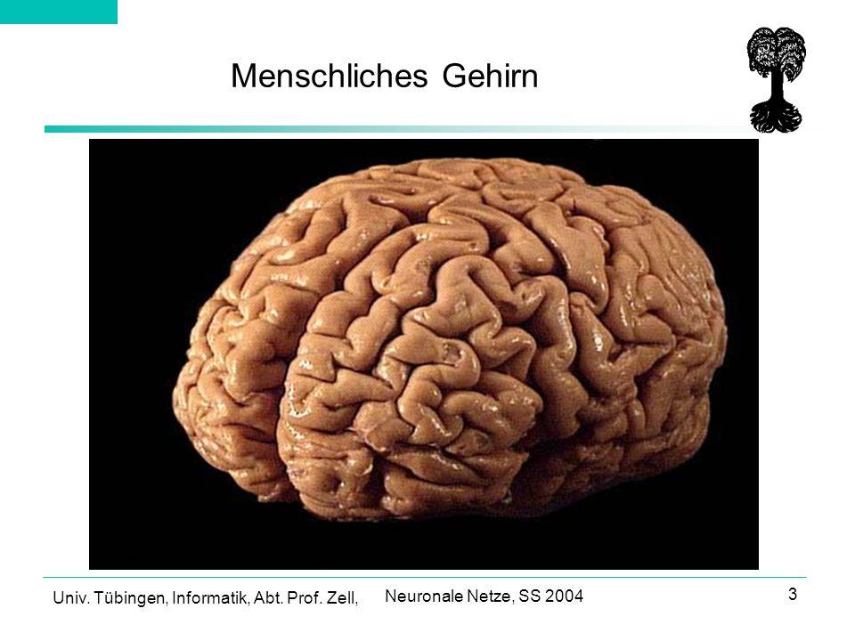 Univ. Tübingen, Informatik, Abt. Prof. Zell, Neuronale Netze, SS 2004 3 Menschliches Gehirn