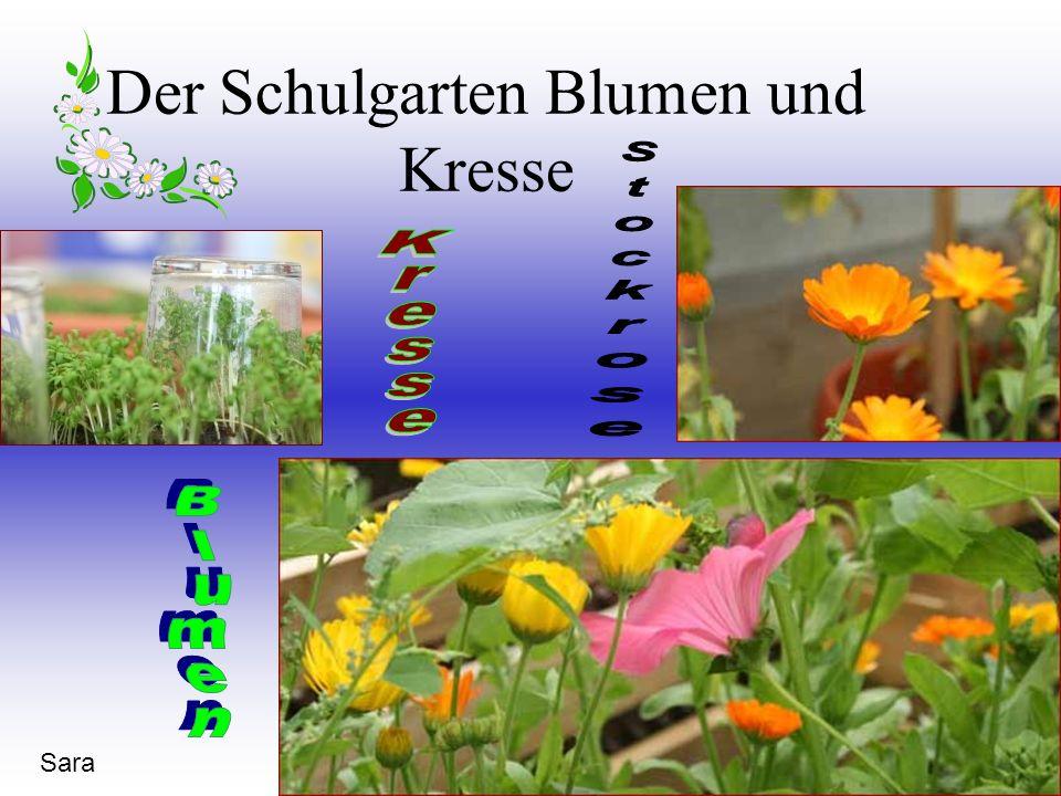 Sara Der Schulgarten