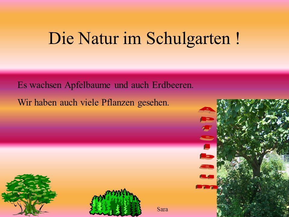 Schädlinge und keine Schädlinge Die Schädlinge sind :Schnecken,Nacktschnecken Keine Schädlinge : Marienkäfer, Regenwürmer,spinnen,Fliegen und so weite