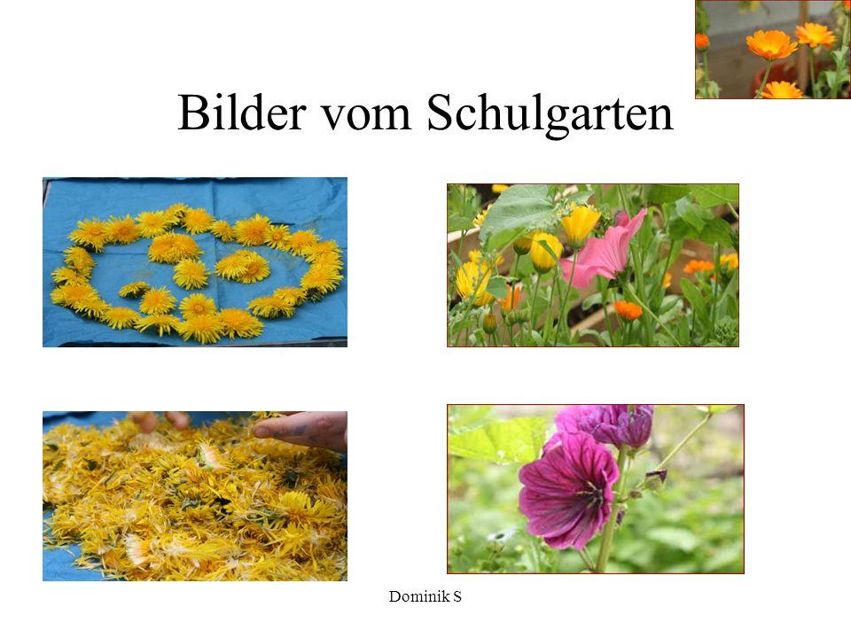 Dominik S Der Schulgarten...
