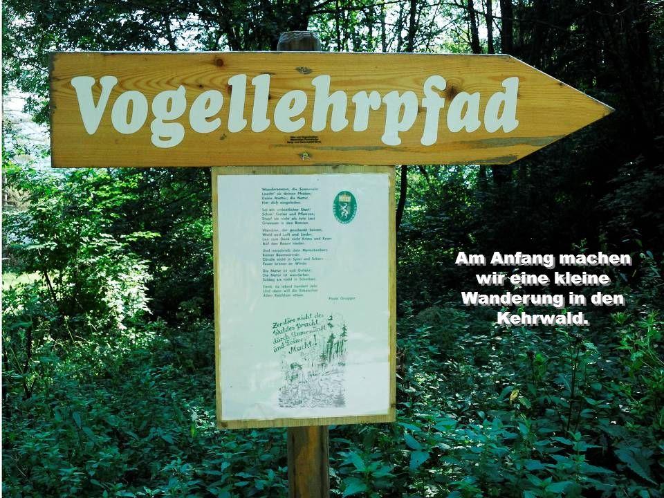 Am Anfang machen wir eine kleine Wanderung in den Kehrwald.