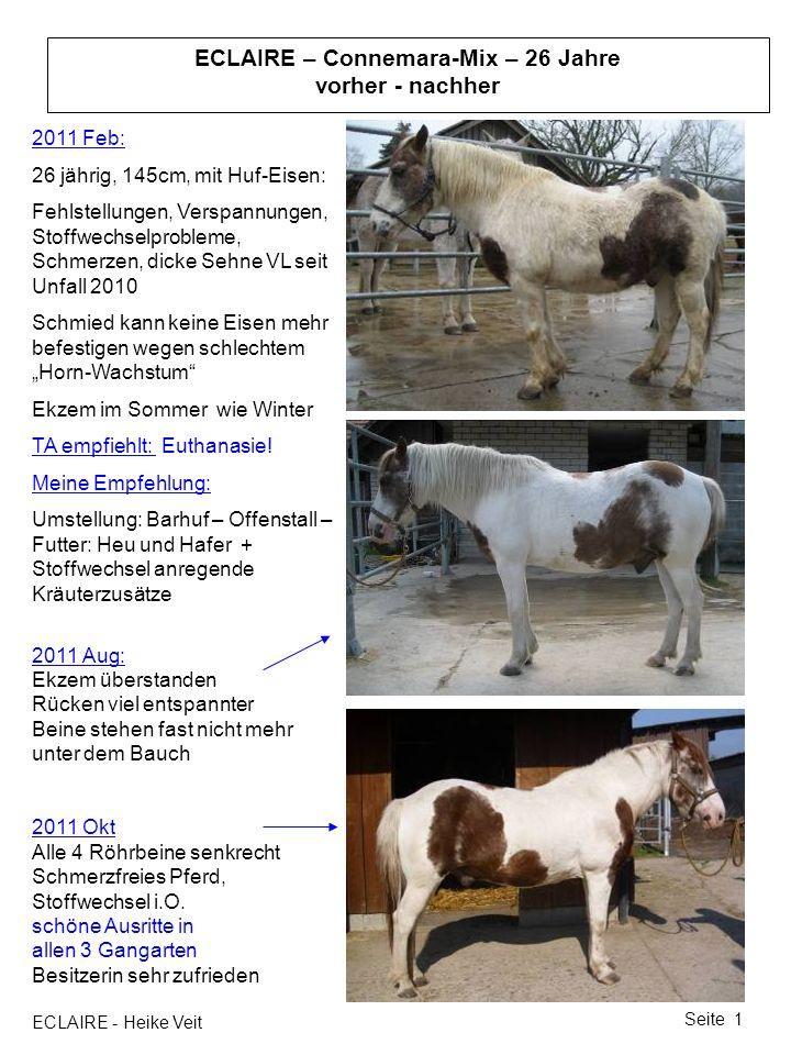 ECLAIRE - Heike Veit Seite 1 ECLAIRE – Connemara-Mix – 26 Jahre vorher - nachher 2011 Feb: 26 jährig, 145cm, mit Huf-Eisen: Fehlstellungen, Verspannun
