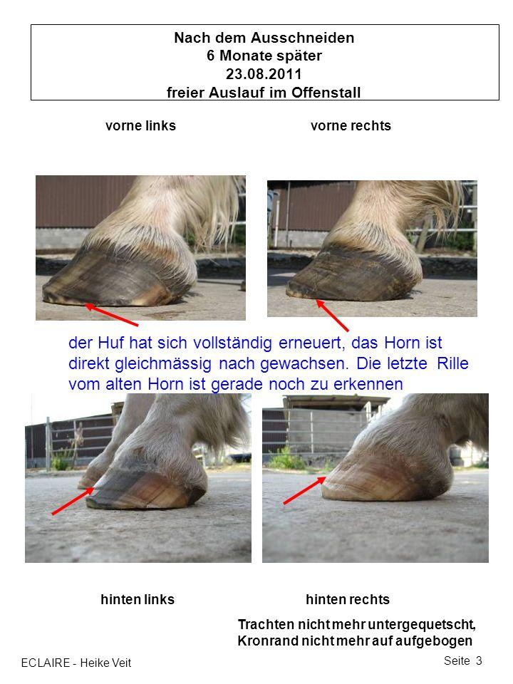 ECLAIRE - Heike Veit Seite 3 Nach dem Ausschneiden 6 Monate später 23.08.2011 freier Auslauf im Offenstall vorne linksvorne rechts hinten linkshinten