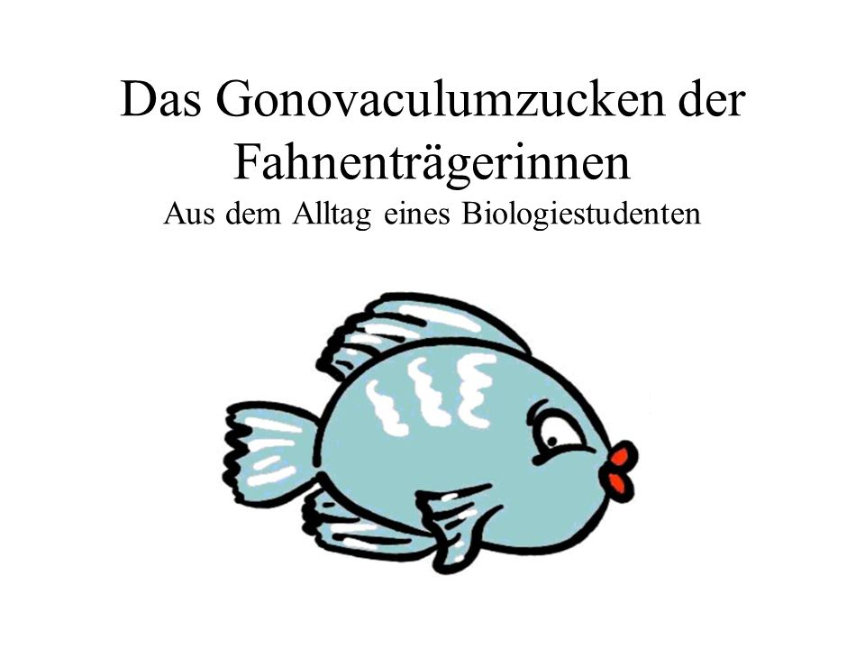 Das Gonovaculumzucken der Fahnenträgerinnen Aus dem Alltag eines Biologiestudenten