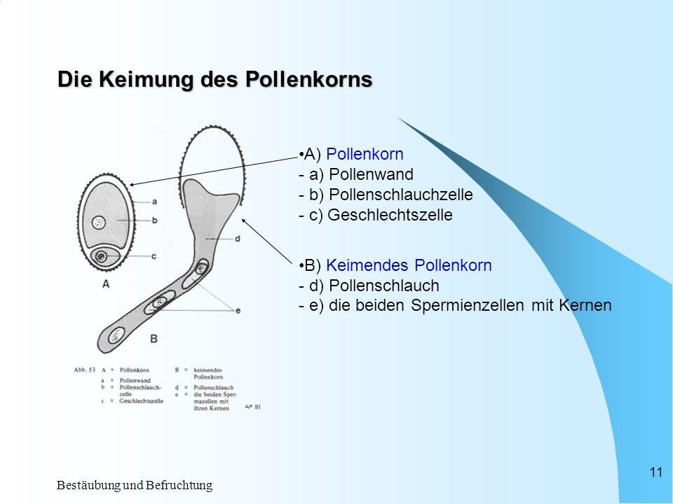 Bestäubung und Befruchtung 10 Bau der Samenanlage (= Fruchtknoten) a)Narbe b)Fruchtknotenwand c)Samenanlage d)Integumente e)Eizelle f)Embryosack g)Sek