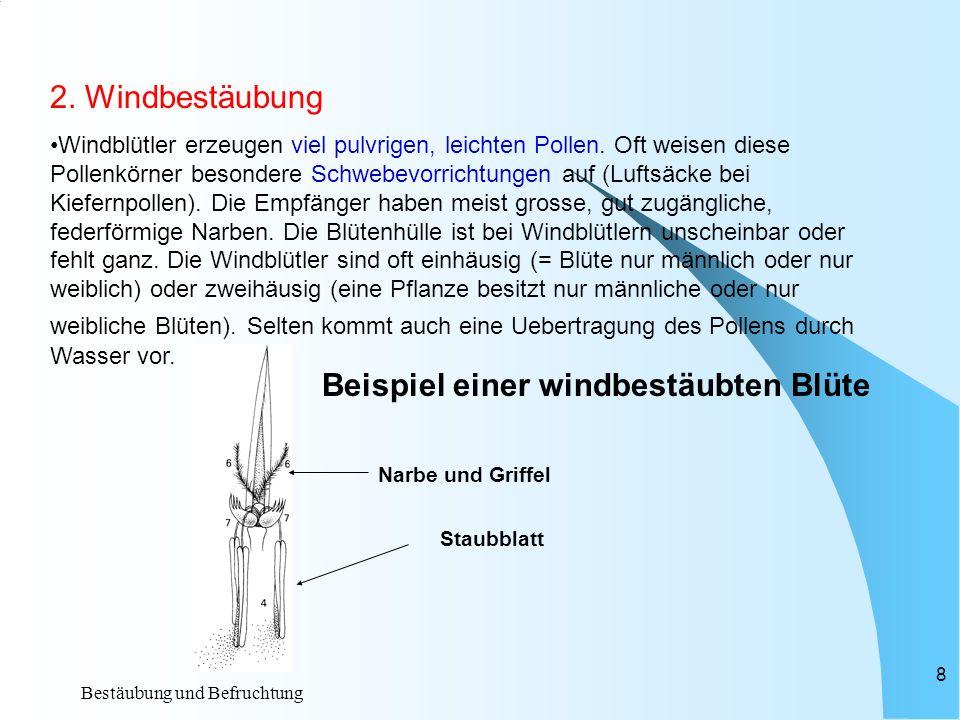 Bestäubung und Befruchtung 7 Beispiel einer insektenbestäubten Blüte: Kronblatt Kelchblatt Staubblatt Fruchtknoten