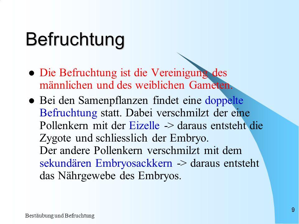 Bestäubung und Befruchtung 9 Befruchtung Die Befruchtung ist die Vereinigung des männlichen und des weiblichen Gameten.