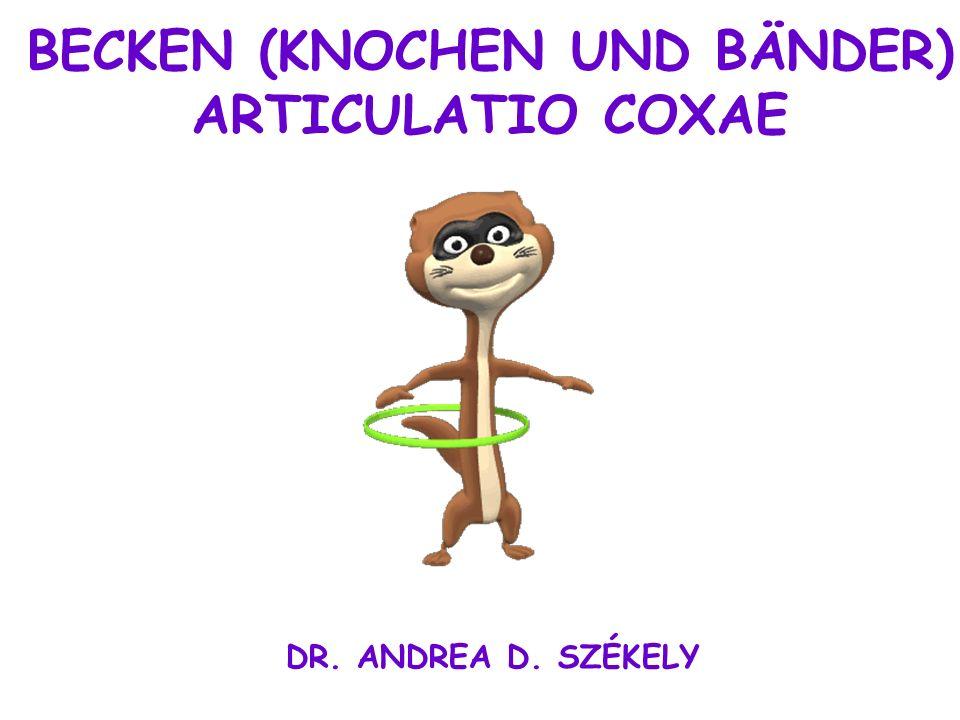 BECKEN (KNOCHEN UND BÄNDER) ARTICULATIO COXAE DR. ANDREA D. SZÉKELY