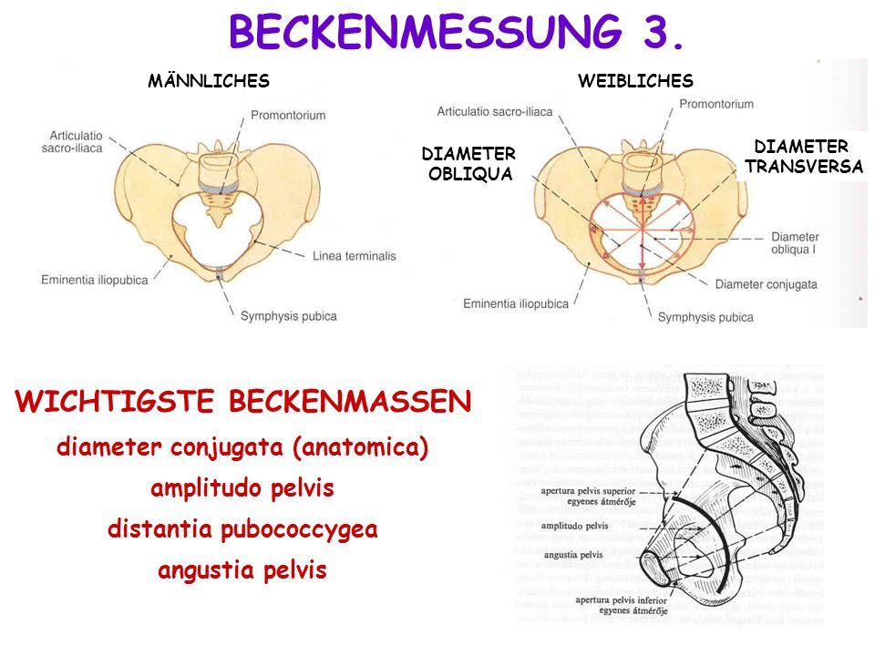 WICHTIGSTE BECKENMASSEN diameter conjugata (anatomica) amplitudo pelvis distantia pubococcygea angustia pelvis BECKENMESSUNG 3. MÄNNLICHESWEIBLICHES D