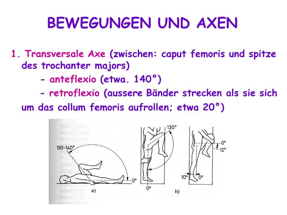 1. Transversale Axe (zwischen: caput femoris und spitze des trochanter majors) - anteflexio (etwa. 140°) - retroflexio (aussere Bänder strecken als si