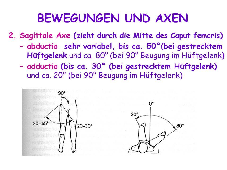 2. Sagittale Axe ( zieht durch die Mitte des Caput femoris ) –abductio sehr variabel, bis ca. 50°(bei gestrecktem Hüftgelenk und ca. 80° (bei 90° Beug