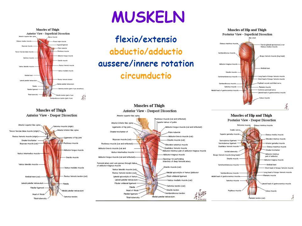 flexio/extensio abductio/adductio aussere/innere rotation circumductio MUSKELN