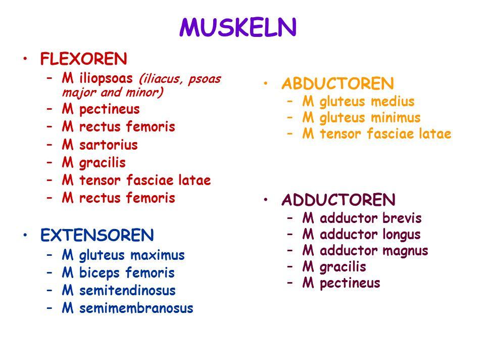 ABDUCTOREN –M gluteus medius –M gluteus minimus –M tensor fasciae latae ADDUCTOREN –M adductor brevis –M adductor longus –M adductor magnus –M gracili