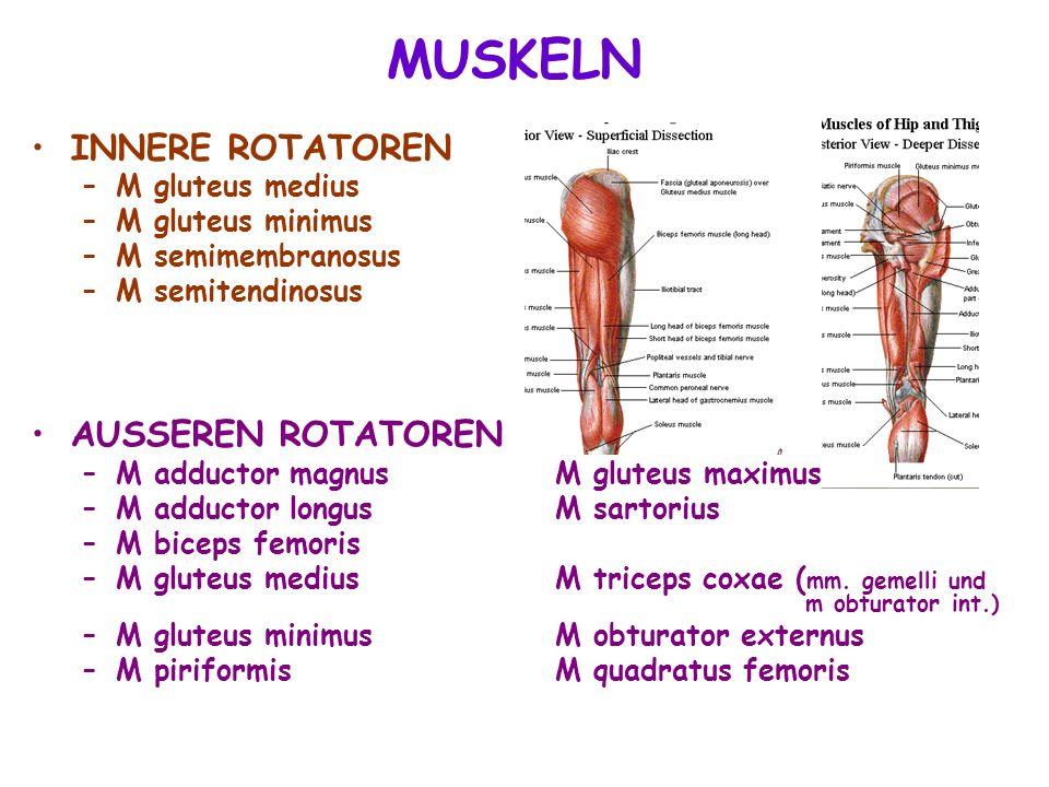 INNERE ROTATOREN –M gluteus medius –M gluteus minimus –M semimembranosus –M semitendinosus AUSSEREN ROTATOREN –M adductor magnus M gluteus maximus –M