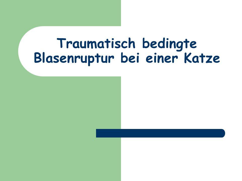 Uroabdomen 1. Harnblasenruptur 2. Urethraruptur 3. Ureterenruptur, Nierenruptur