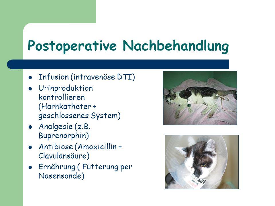 Postoperative Nachbehandlung Infusion (intravenöse DTI) Urinproduktion kontrollieren (Harnkatheter + geschlossenes System) Analgesie (z.B. Buprenorphi