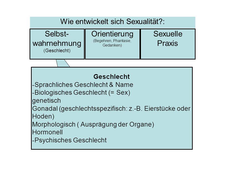 Geschlecht - Sprachliches Geschlecht & Name - Biologisches Geschlecht (= Sex) genetisch Gonadal (geschlechtsspezifisch: z.-B. Eierstücke oder Hoden) M