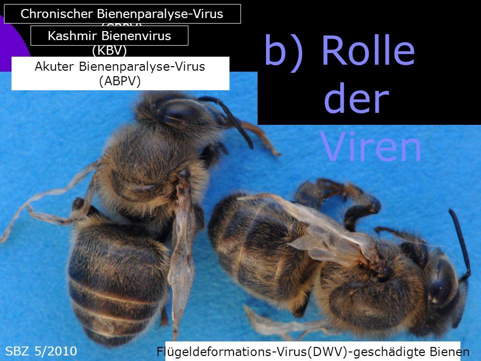 b) Rolle der Viren Flügeldeformations-Virus(DWV)-geschädigte Bienen Akuter Bienenparalyse-Virus (ABPV) SBZ 5/2010 Chronischer Bienenparalyse-Virus (CBPV) Kashmir Bienenvirus (KBV)