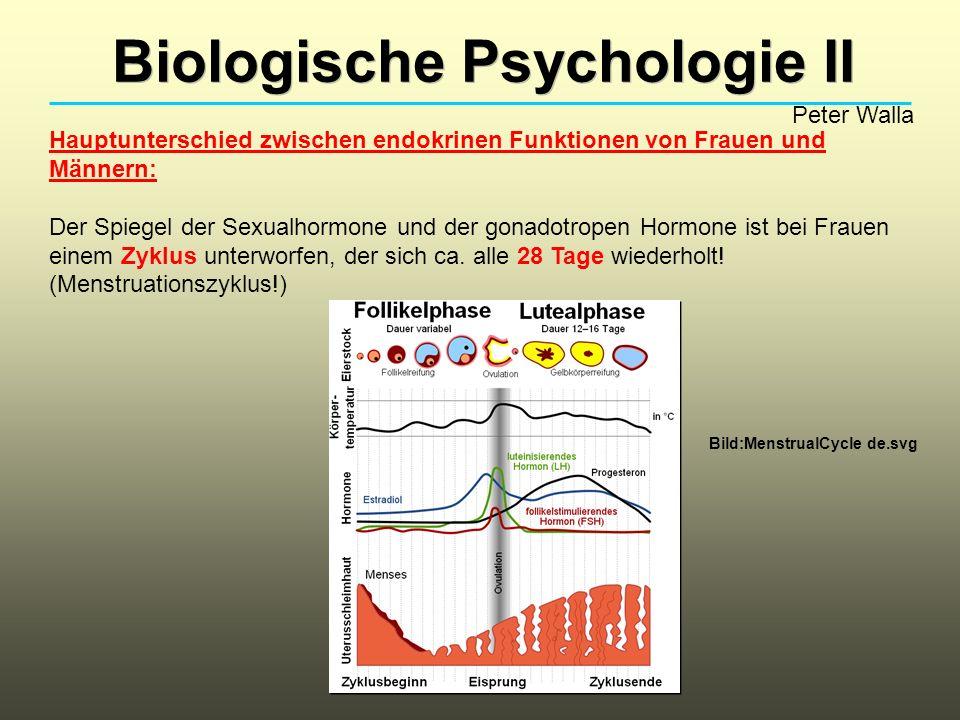 Biologische Psychologie II Peter Walla Hauptunterschied zwischen endokrinen Funktionen von Frauen und Männern: Der Spiegel der Sexualhormone und der g