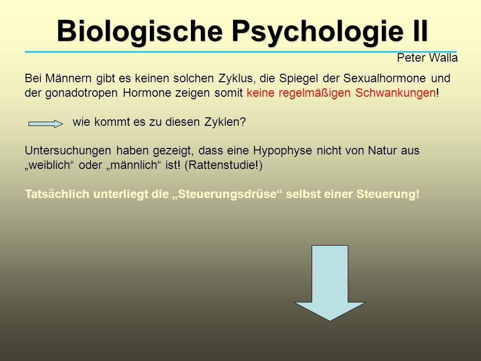 Biologische Psychologie II Peter Walla Bei Männern gibt es keinen solchen Zyklus, die Spiegel der Sexualhormone und der gonadotropen Hormone zeigen so