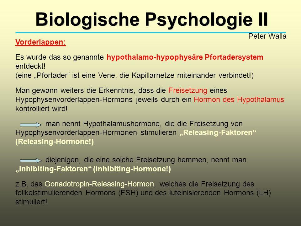Biologische Psychologie II Peter Walla Vorderlappen: Es wurde das so genannte hypothalamo-hypophysäre Pfortadersystem entdeckt! (eine Pfortader ist ei