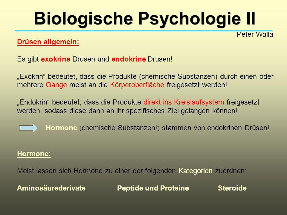 Biologische Psychologie II Peter Walla Drüsen allgemein: Es gibt exokrine Drüsen und endokrine Drüsen! Exokrin bedeutet, dass die Produkte (chemische