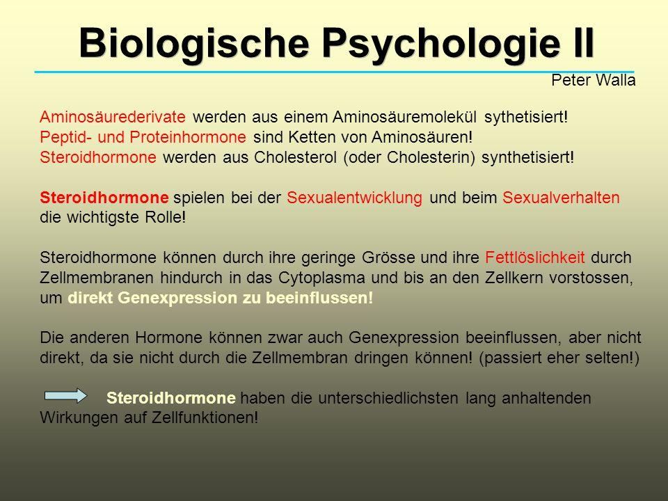 Biologische Psychologie II Peter Walla Aminosäurederivate werden aus einem Aminosäuremolekül sythetisiert! Peptid- und Proteinhormone sind Ketten von