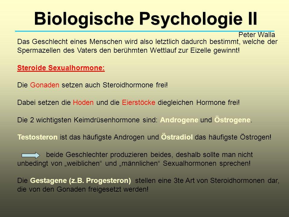 Biologische Psychologie II Peter Walla Das Geschlecht eines Menschen wird also letztlich dadurch bestimmt, welche der Spermazellen des Vaters den berü