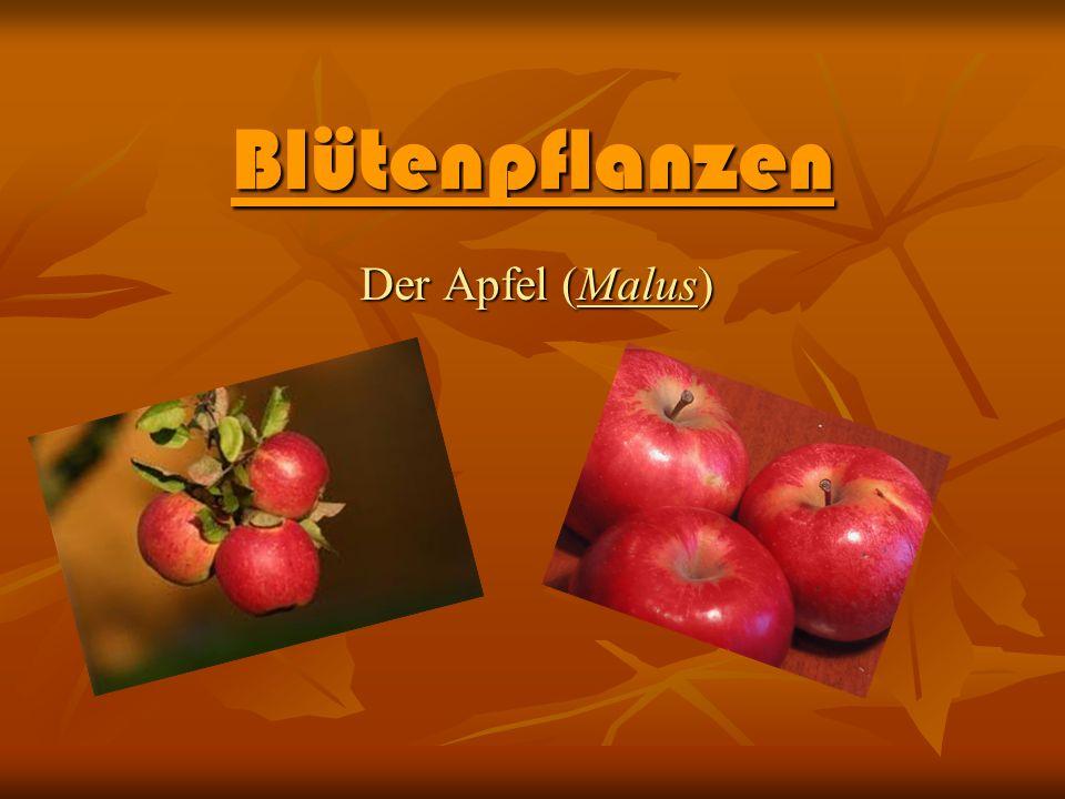 Blütenpflanzen Der Apfel (Malus)